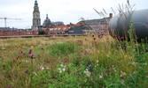 Referenzobjekt Retentionsdach Werkmann College Groningen