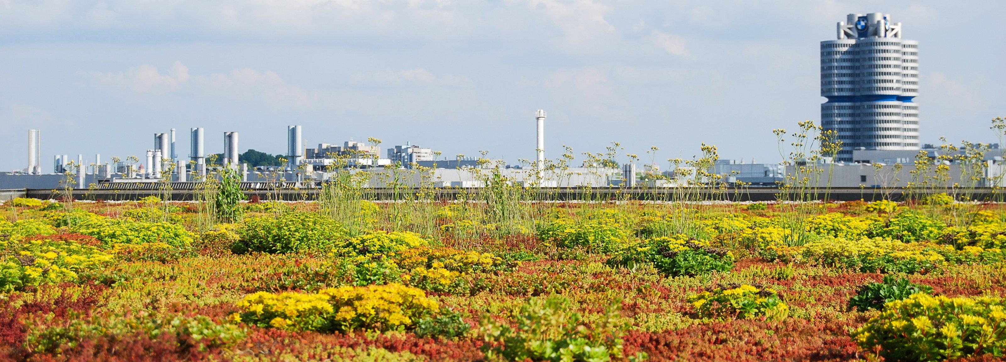 Mehr Lebensqualität trotz Urbanisierung – Dank Dachbegrünung